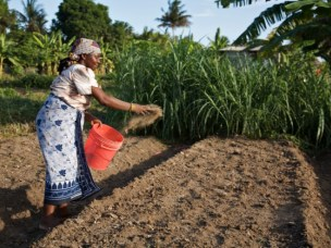 CLTS Working Paper on fertilizer and sustainable intensification in Africa