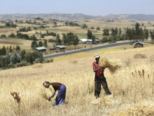 Investing in land in Ethiopia