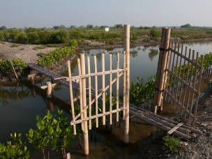Mangrove at Pulau Dua Natural Reserve