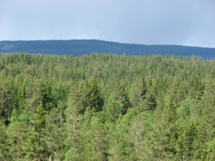 Norway is in a unique position with large amounts of renewable biological resources from forest.
