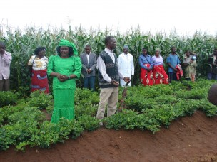 CLTS Working Paper on the adoption potential of Conservation Agriculture technologies in Malawi