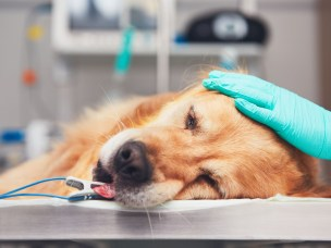 Serious illness in dogs in Norway