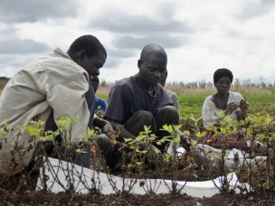 New Journal Paper on use of Integrated Soil Fertility Management Technologies in Malawi