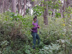 Remotely sensed data for improving forest information in Ethiopia
