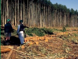 REDD, NGOs and Local Government in Tanzania