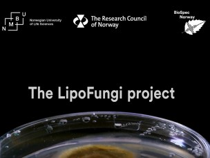 News about biotechnological research project LipoFungi