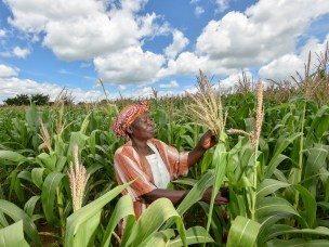 Governing seeds in East Africa in the face of climate change