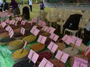 The role of community seed banks in achieving farmers' rights