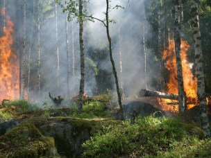NERIS Webinar on Chernobyl wildfires