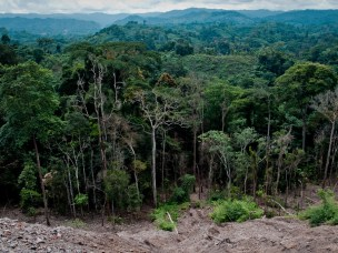 What causes deforestation in the Democratic Republic of Congo?