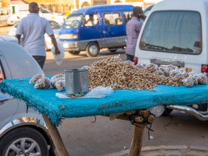 'The UN is finally raising the topic of seed security.'