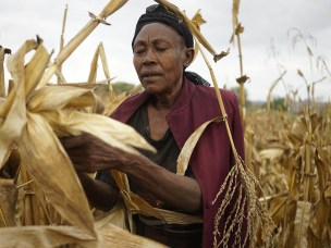 Gendered constraints to food security measures in Ethiopia