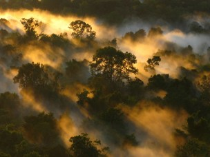 Stressed tropical forests will soon be releasing more carbon than they absorb