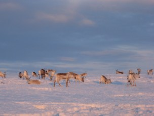 Advancing the adaptive capacity of Arctic communities