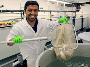 From Indian oil to green fish feed in Norway