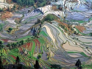 Terrace rice fields in Yunnan Province, China.
