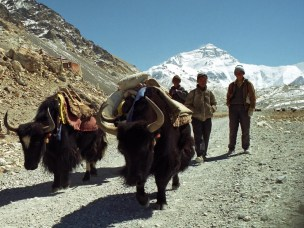 Vulnerability of pastoralism in the high mountains of Nepal