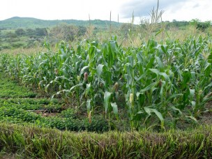 New Book Chapter on Impact of Farm Input Subsidies Vis-à-Vis Climate-Smart Technologies on Maize Productivity: A Tale of Smallholder Farmers in Malawi