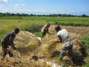 New Journal Paper on awareness and adoption of conservation agriculture in Malawi