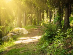 Seminar: From landscape and forest preferences to outdoor-recreation behaviour