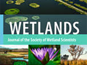 Viability of constructed wetland for treatment of dye wastewater in Pakistan