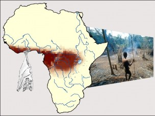 Biogeography and Ebola mapping