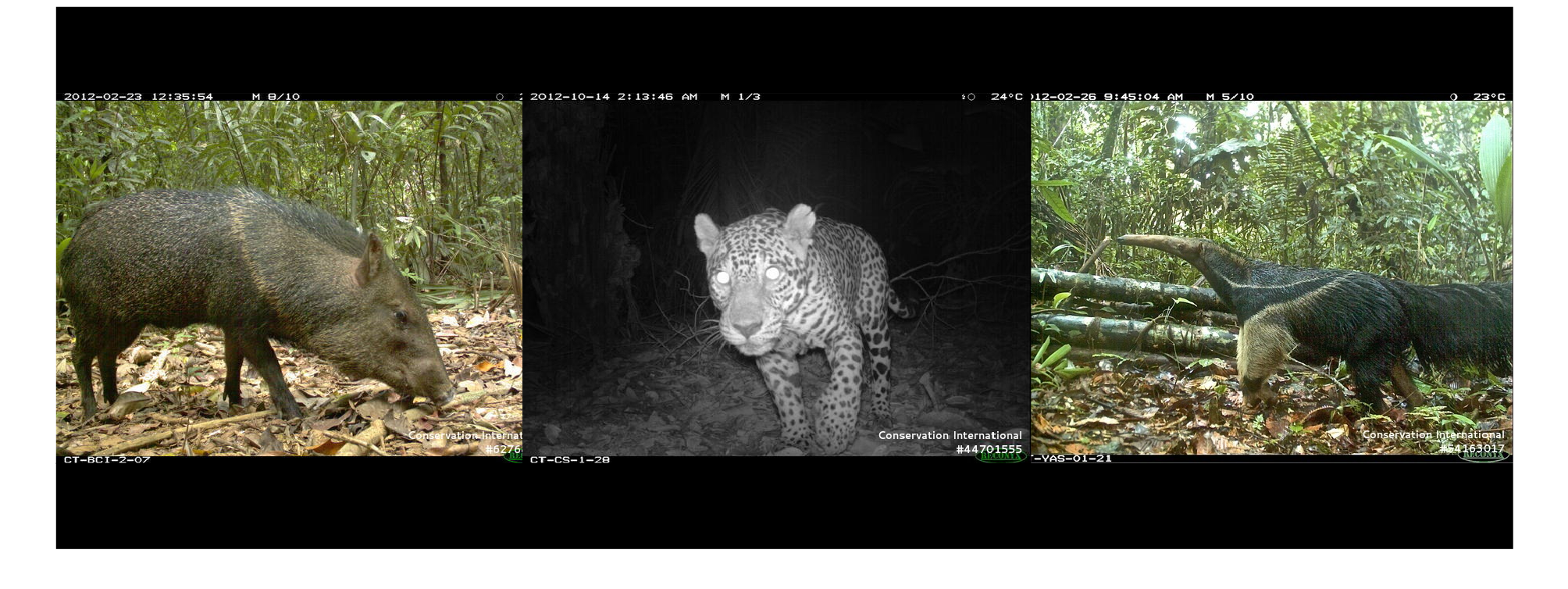 Mammals detected by camera traps