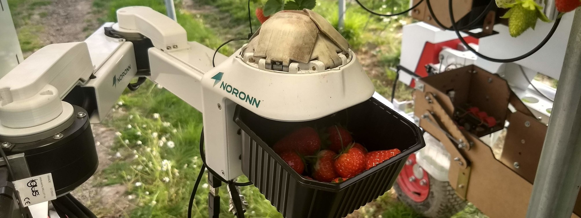 Robotic strawberry harvester developed by NMBU and NORONN