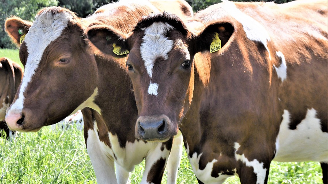 Bio4Fuels partner St1 joins forces with food company to produce biogas from manure and agricultural by-products