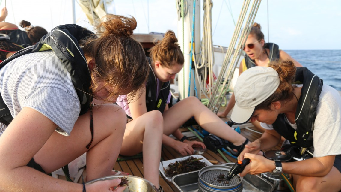 Citizen science at sea – confronting, consciousness raising and a call to action