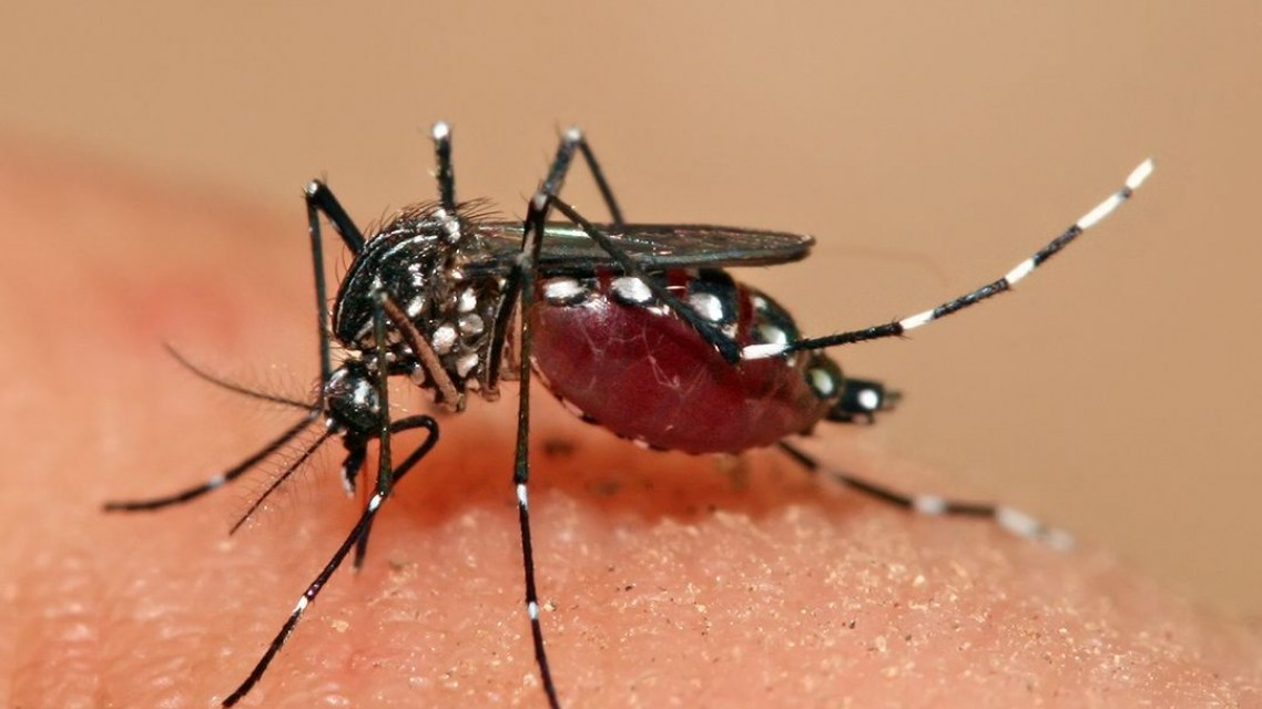New research project to investigate how climate change affects vulnerability to dengue fever