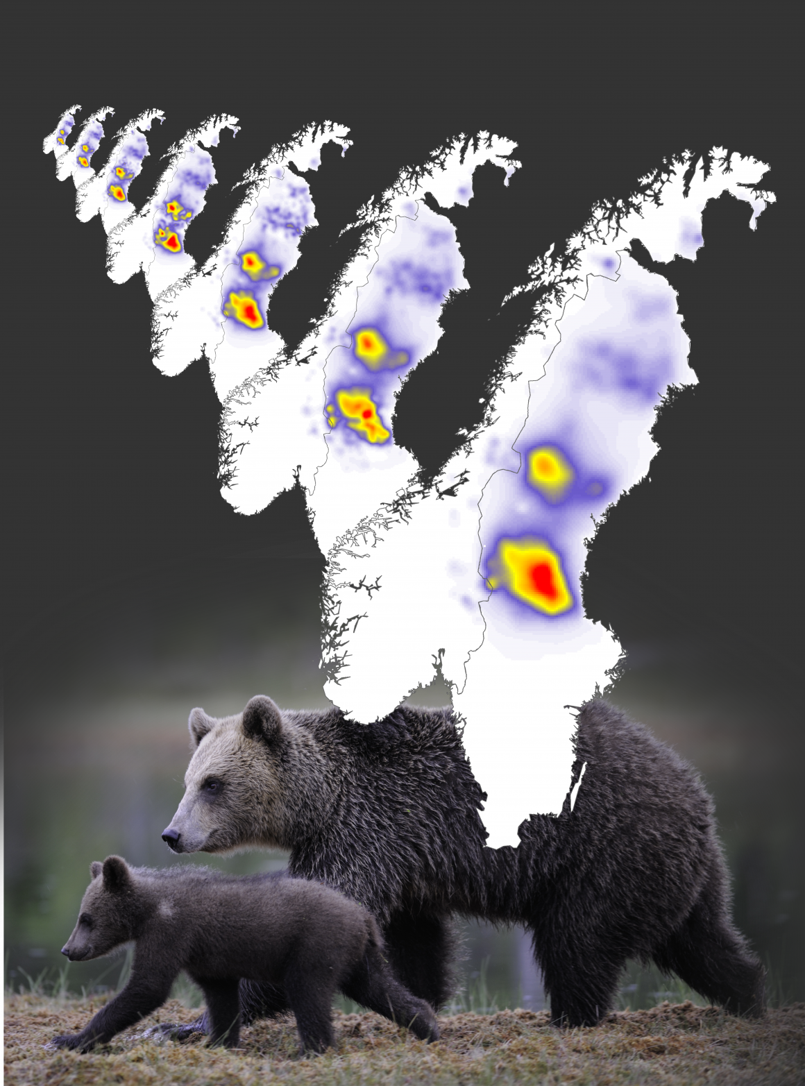 Annual maps of brown bear population density in Scandinavia from 2012 to 2018.