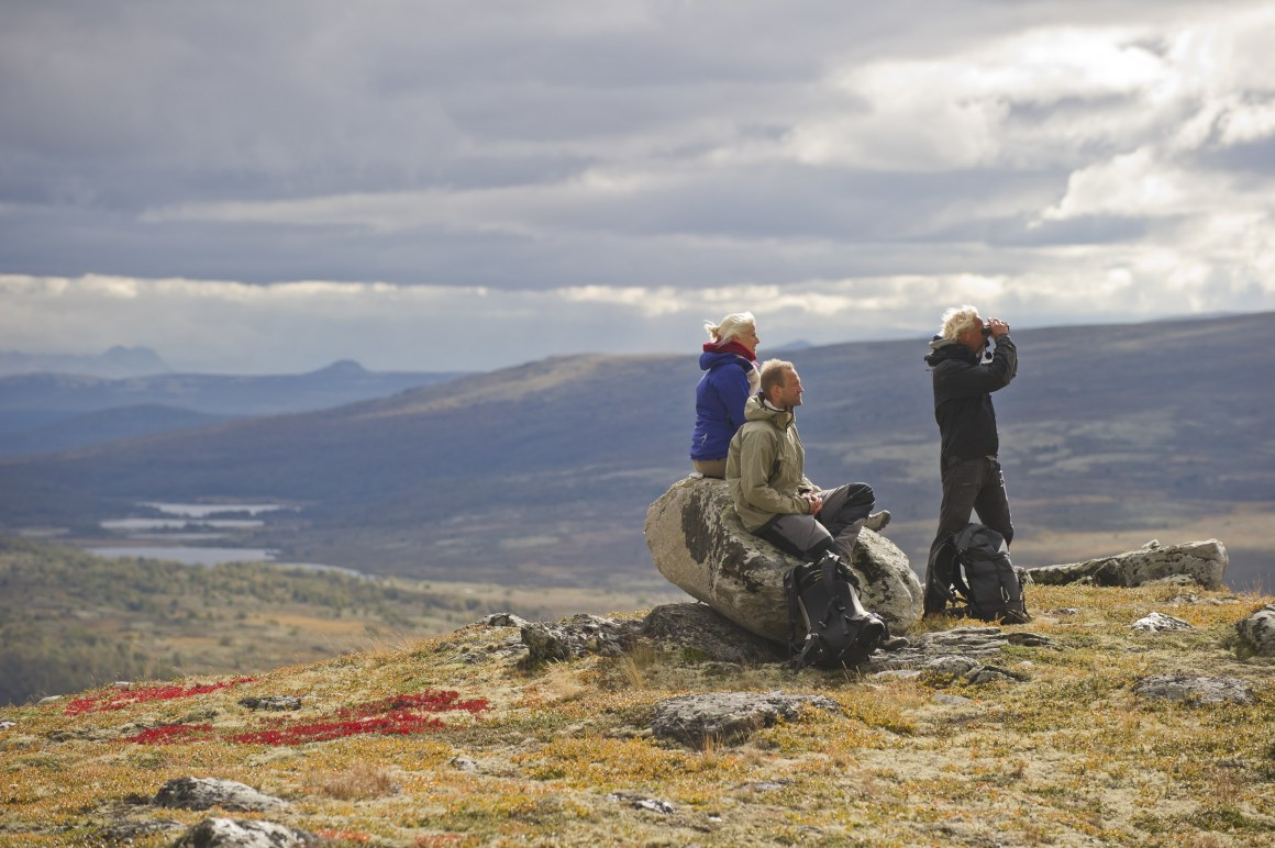 Tourists scouting for wild reindeer in Rondane National Park.