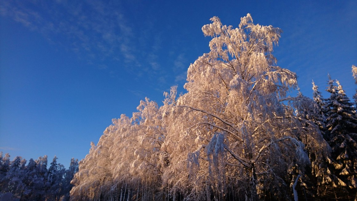 Many plant species close their communication channels down in winter, with the help of ABA.