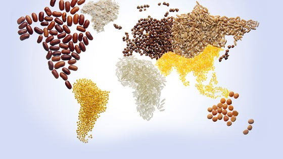 Global food law