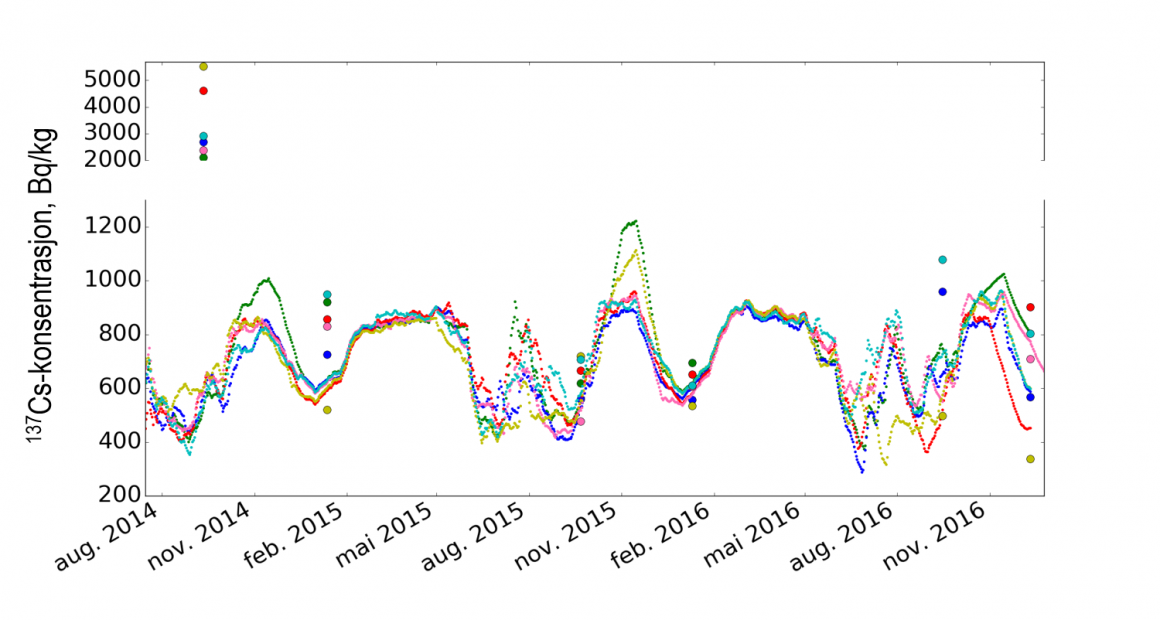 Figure 2. Dotted lines show modelled caesium concentrations in 6 Vågå reindeer during August 2014 - Desember 2016, while the dots show the measured concentrations in the same individuals in September and December/January each year. Wild mushrooms were very abundant in autumn 2014, while they were few in 2015. Last autumn there were some more mushrooms than in 2015.