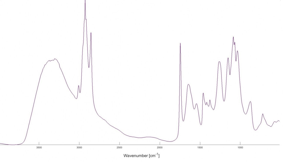FTIR spectrum of Mucor circinelloides