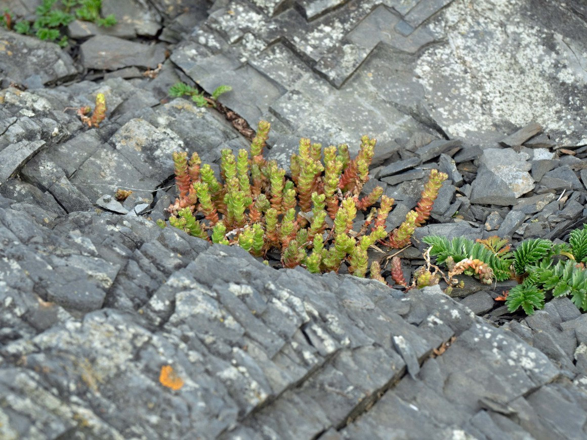 Whilst on land, moss and other plants take up residence in cracks and crevices, under water it is mussels and barnacles amongst other things.