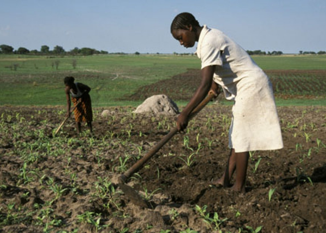 Zambia farming revolution