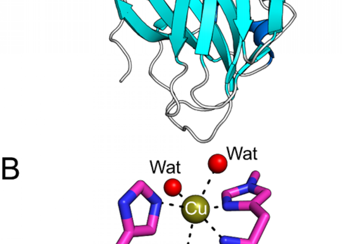 Crystal structure of an LPMO
