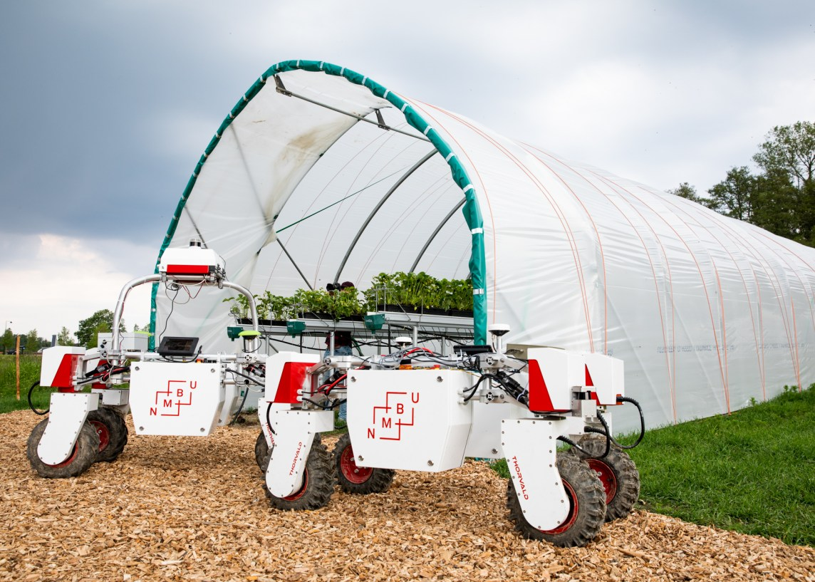 Thorvald robots by polytunnel