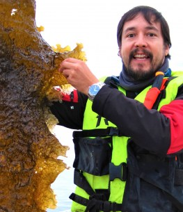 SafeKelp: Safe kelp for food and feed – controlling the transfer of iodine and arsenic through the value chain