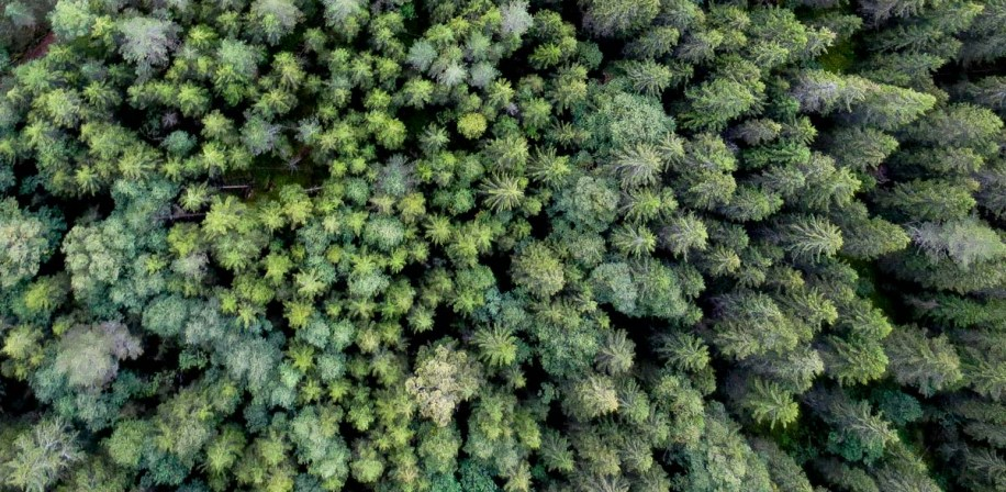 Find your dream tree with a digitalised forest