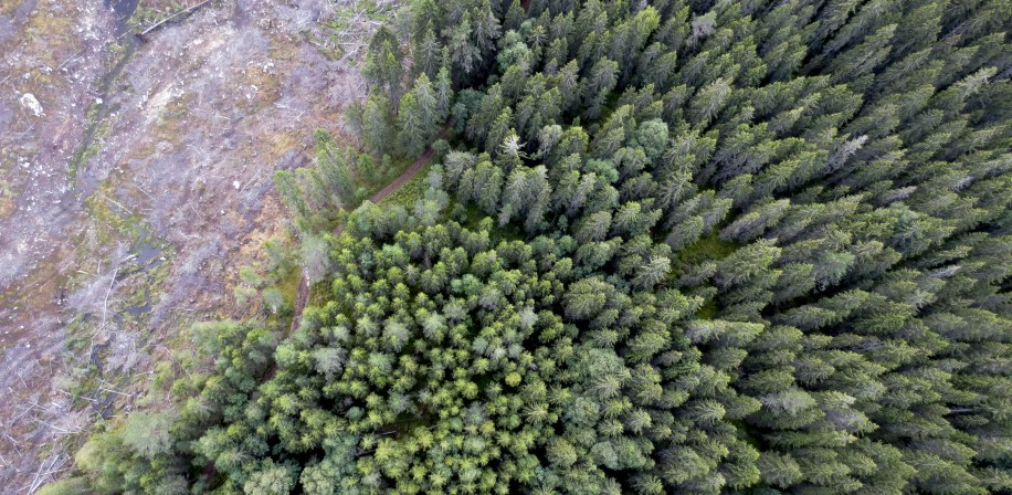 New project on climate smart forestry in Norway