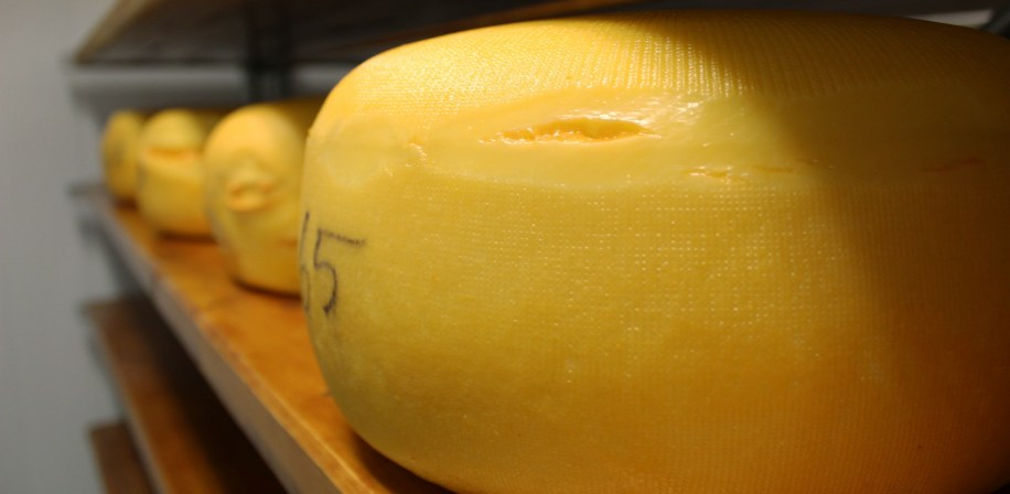Cheese from dairy cows on a yeast-diet.