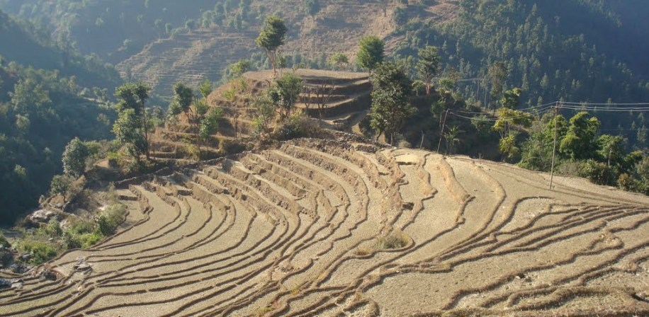 Agricultural land in Nepal.