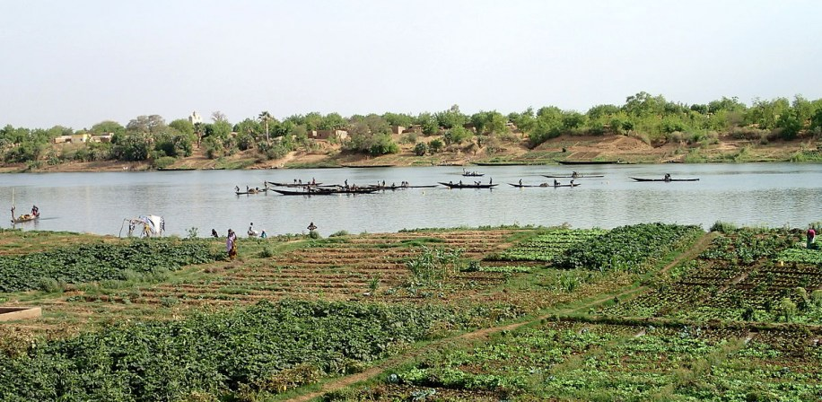 Crops cultivated on the banks of the Senegal River in Mali's Kayes region.