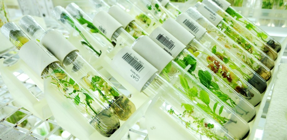 Plant samples in the genebank at CIAT's Genetic Resources Unit