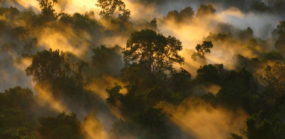 Amazon forest canopy at dawn in Brazil.