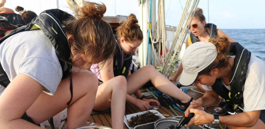 Processing data from the Manta Trawl